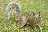 Attendez-vous à croiser de nombreux écureuils ! Pas si farouches !