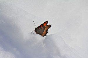 Le farfalle vi aspettano a New York!